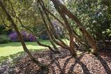 Trewithen Gardens, Near Truro, Cornwall, England Fotografisk tryk af Paul Harris