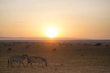 Kenya, Mara North Conservancy. Plains Game Graze in Morning Light, Mara North Conservancy Photographic Print by Niels Van Gijn
