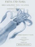 Sea Creatures - Napoli Giclée-tryk af Stephanie Monahan