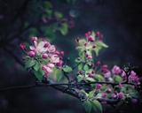 Floral Elegance Giclee Print by Irene Suchocki