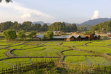 India, Arunachal Pradesh, Ziro Valley Photographic Print by Amar Grover