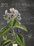Vintage Botanical - Wildflower Giclee Print by Stephanie Monahan