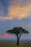 Kenya, Masai Mara, Narok County. Sunrise in Masai Mara National Reserve. Photographic Print by Nigel Pavitt