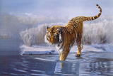 Siberian Tiger Giclee Print by Leonard Pearman