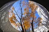 Asia, Japan, Honshu, Yokohama, Autumn Trees Photographic Print by Christian Kober