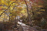 North Korea, Kumgang. Kumgang Mountains in Autumn. Photographic Print by Katie Garrod