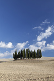 Cypress Trees Near San Quirico D'Orcia, Tuscany, Italy Photo by Julian Castle