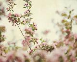 Garden Grace Giclee Print by Irene Suchocki
