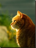 Red Wonderful Cat With Sun Stretched Canvas Print by  Wonderful Dream