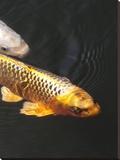 Orange Koi Fish Style Stretched Canvas Print by  Wonderful Dream