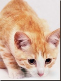 Red Cute Cat Pet Friend Stretched Canvas Print by  Wonderful Dream