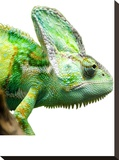 Exotic Reptile Animal Stretched Canvas Print by  Wonderful Dream
