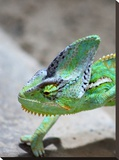 Exotic Reptile Animal 2 Stretched Canvas Print by  Wonderful Dream