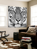 Tiger Posters by  PhotoINC Studio
