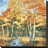 Wellspring 1 Leinwand von Carolyn Reynolds