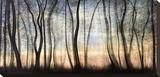 Silver Forest Leinwand von Carolyn Reynolds