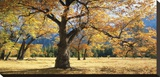 Yosemite Black Oaks Stretched Canvas Print by Loren Soderberg