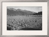 Guayule Field Print by Ansel Adams