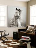 Caballo de Andaluz Prints by Lisa Dearing