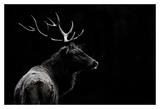 The deer soul Art by Massimo Mei