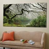 Garden Mist Posters par Don Schwartz