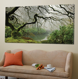Garden Mist Plakater av Don Schwartz