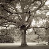 Hampton Maple I Fotografisk tryk af Alan Blaustein