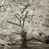 Hamption Magnolia II Photographic Print by Alan Blaustein