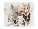 Bull Terrier with Ghost Image Giclee Print by Barbara Keith