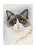 Ragdoll Giclee Print by Barbara Keith