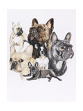 French Bulldog Giclee Print by Barbara Keith