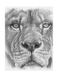 Up Close Lion Giclee Print by Barbara Keith