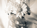 Summer Mums BW Photographic Print by Bob Rouse