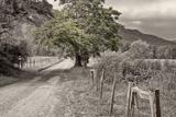 Country Lane Fotografisk trykk av Bob Rouse