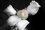 005 Roses BW Fotoprint van Bob Rouse