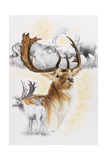 Fallow Deer Giclee Print by Barbara Keith