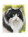 Maine Coon Giclee Print by Barbara Keith