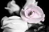 Attache Roses BW Fotoprint van Bob Rouse