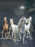 Dream Horses 020 Photographic Print by Bob Langrish