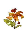 Orange Hibiscus Giclee Print by Cayena Blanca