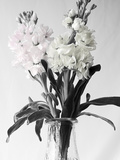 Pink and White Stock2 BW Fotoprint van Bob Rouse