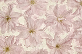 Vintage Blossom Photographic Print by Cora Niele