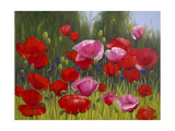 Red Poppies Giclee Print by Edward Park