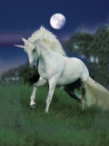 Dream Horses 047 Photographic Print by Bob Langrish