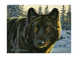 Black Wolf Giclee Print by Bruce Miller