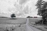 Hilly Road BW Fotografisk trykk av Bob Rouse