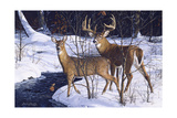 Zone 2 Whitetails Giclee Print by Bruce Miller