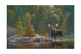 North Country Moose Giclee Print by Bruce Miller