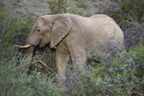 African Elephants 059 Photographic Print by Bob Langrish
