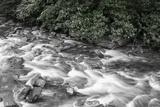 West Prong River 2 BW Fotografisk trykk av Bob Rouse
